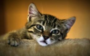 котёнок, мордочка, грустный взгляд, взгляд
