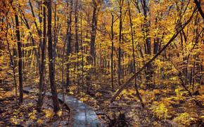 floresta, árvores, outono, estrada, pavimentação, natureza
