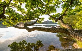 fiume, albero di diffusione, natura