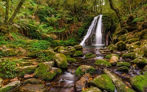 forest, trees, small river, waterfall, stones, moss, nature