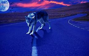 coucher du soleil, planète, route, loup