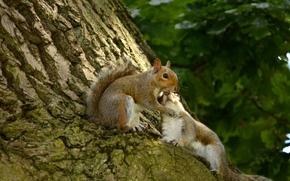влюблённые, беличья любовь, парочка, любовь, белки, дерево, кора