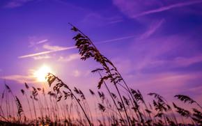 sky, DAWN, rise, reed