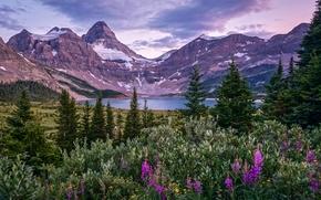 Mount Assiniboine, Montagne Rocciose del Canada, Lago Magog, British Columbia, Canada, Mount Assiniboine, Montagne Rocciose del Canada, Lago Magog, British Columbia, Canada, Montagne, lago, alberi, Fiori
