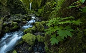 Mossy Grotto Falls, Ruckel Creek, Columbia River Gorge, Oregon, waterfall, creek, stones, moss, foliage