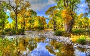 речка, деревья, камни, осень, пейзаж, Wyoming