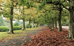 ciudad, parque, calle, otoño, carretera, árboles, follaje, Bancos