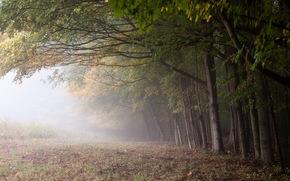 forest, fog, edge