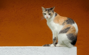 cat, view, wall, background