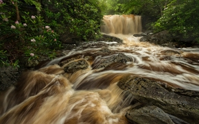 West Virginia, waterfall, river, Big Run river, FLOW, stones, forest, Rhododendrons, bush