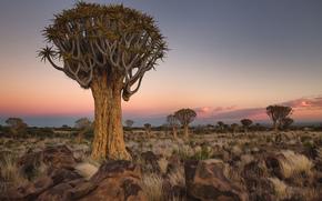 trees, stones, landscape, Africa, Namibia