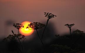 sunset, plant, sun, silhouette, sky
