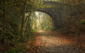 bridge, road, arch, foliage, forest, autumn