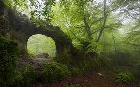 foliage, moss, arch, fog, forest, nature