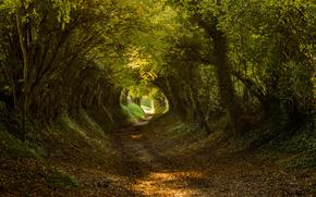 foresta, alberi, TRACK, tunnel