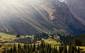 Montagne, Alberi di luce, natura, Kirghizistan