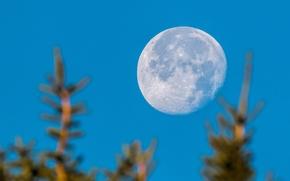 moon, planet, sky, trees, bokeh
