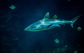 акула, рыбы, аквариум