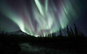 Aurora Borealis, Abete rosso, Catena montuosa di Brooks, A nord, Pendenza, Alaska, USA