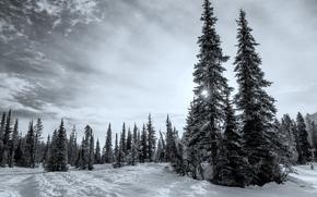 las, zima, British Columbia, Kanada