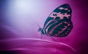 бабочка, макро, фон