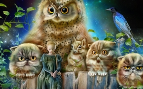 girl, princess, owl, cats, squirrel, bird