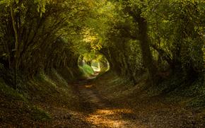 Halnaker, West Sussex, South Downs nazionale ParkEngland, Regno Unito