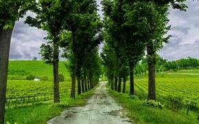 дорога, поле, деревья, пейзаж
