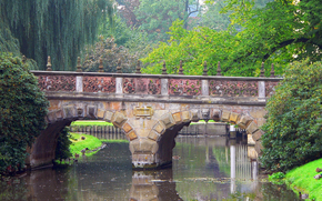 fiume, ponte, parco, alberi, anatra, natura
