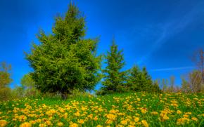 поле, цветы, деревья, пейзаж