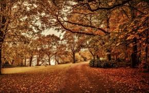 autunno, parco, pond, stradale, alberi, paesaggio