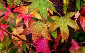 FILIALE, fogliame, autunno, natura