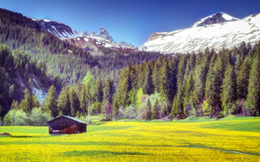 Mountains, trees, field, cabin, landscape