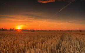 поле, жнивьё, закат