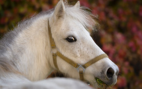 лошадь, конь, голова, морда
