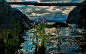 Noruega, Noruega, fiorde, Flores, água, log