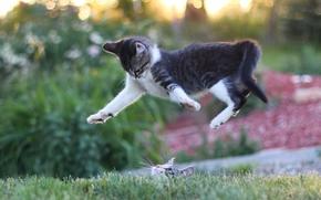 gatto, Gattini, saltare, museruola