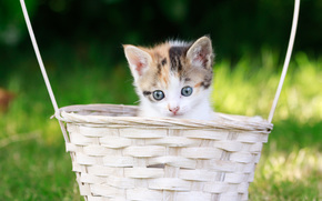 gattino, bambino, museruola, visualizzare, cestino