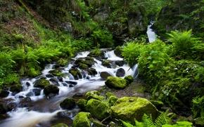 Ravennaschlucht, Black Forest, Germany, Шварцвальд, Германия, ущелье, ручей, речка, камни, растительность