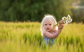 девочка, поле, ромашки, цветы, настроение