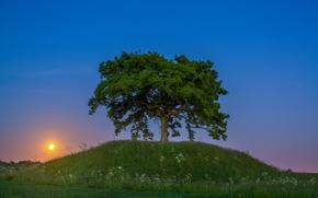 Skåne, Svezia, Skane, Svezia, tramonto, albero, collina