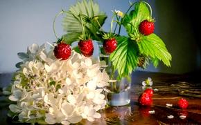 BERRY, strawberry, glass, flower, hydrangea, still life