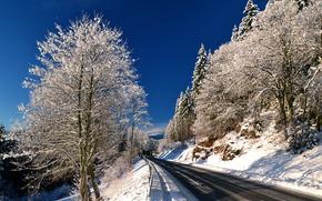冬, 木, 道路, 風景