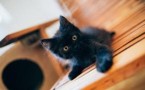 black kitten, kitten, black, baby