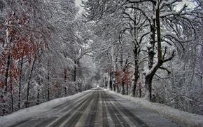 bosque, árboles, carretera, nieve, paisaje