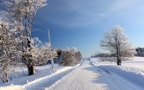 inverno, stradale, alberi, paesaggio