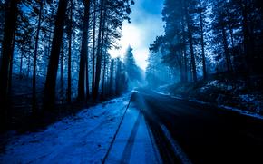 tramonto, inverno, foresta, alberi, stradale, paesaggio