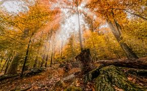 otoño, bosque, árboles, naturaleza