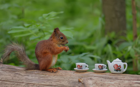 forest, tree, BARREL, squirrel, squirrel, cups, tea, Tea Party, funny, humor