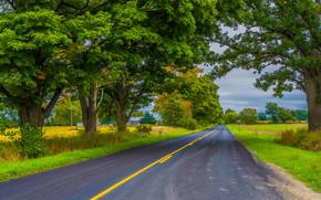 дорога, деревья, поля, дома, пейзаж